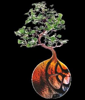 handbookforliving-bonsai-v1-clear-300x350